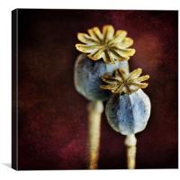 Dried Poppy Heads, Canvas Print