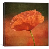 Poppy in a sea of red, Canvas Print