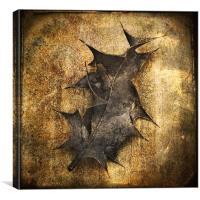 Old Holly Leaf, Canvas Print