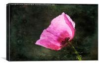 Poppy Sunshine, Canvas Print