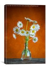 Oxeye Daisies, Canvas Print