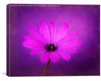 Purple Beauty, Canvas Print