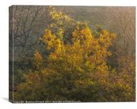 Golden Morning, Canvas Print