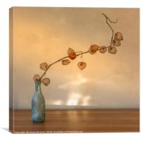 Physalis in a Bottle, Canvas Print