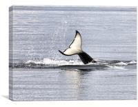 An Orca's Tail, Canvas Print