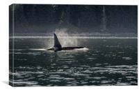 Morning Orca, Canvas Print