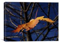 Last leaf of autumn, Canvas Print