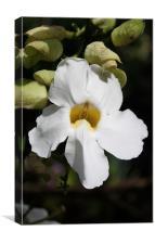 White Flower, Canvas Print