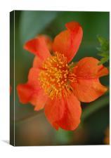 Orange Geranium, Canvas Print