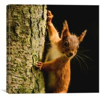 Red squirrel with a caterpillar climbing up the tr, Canvas Print