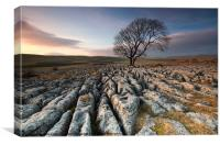 Malham Tree, Canvas Print