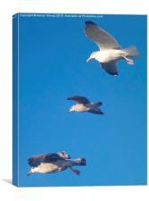 Better than flying ducks, Canvas Print