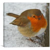 Cheeky Robin, Canvas Print
