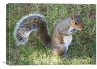 Squirrel Eating, Canvas Print