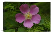 Wild Rose A, Canvas Print