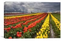 Tulip Storm, Canvas Print