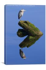Great Blue Reflection, Canvas Print