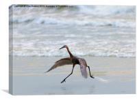 Heron Ballet, Canvas Print