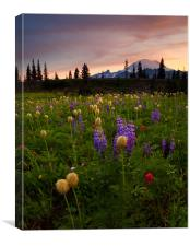 Red Sky Meadow, Canvas Print
