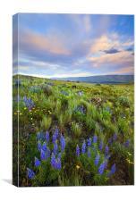 High Desert Spring, Canvas Print