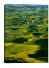 Palouse Morning, Canvas Print