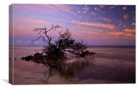 Florida Mangrove Sunset, Canvas Print