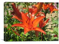 Cretian Lilly, Canvas Print