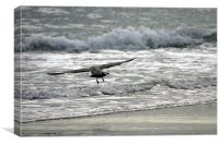 Surfing On The Wing, Canvas Print