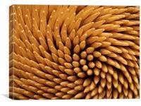 toothpicks, Canvas Print