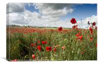 Poppies blowing in the wind, Canvas Print