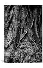 Tree Bark, Canvas Print