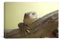 Lizard #2