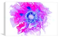 Abstract Poppy, Canvas Print