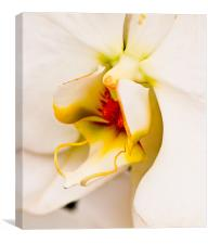 Orchid 1, Canvas Print