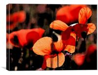 Red Poppy 2, Canvas Print