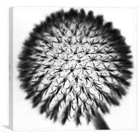 Dandelion, Canvas Print