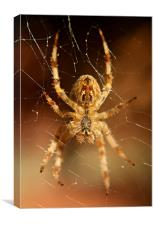 garden spider, Canvas Print