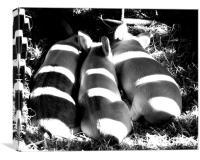 3 little pigs, Canvas Print