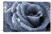 Frozen rose, Canvas Print
