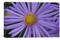 Purple Close Up, Canvas Print