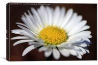 Daisy 2, Canvas Print