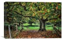 Underneath The Chestnut Tree, Canvas Print