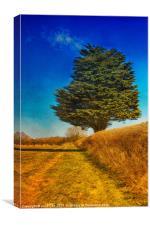 Yew Tree, Canvas Print