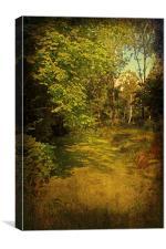 River Algae, Canvas Print