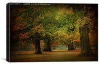 Through Trees, Canvas Print