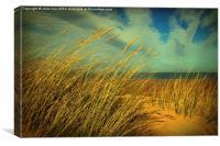 Holkham Dunes, Canvas Print
