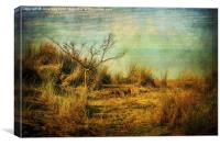 Beach Tree, Canvas Print