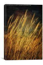 Holkham Dunes 2, Canvas Print