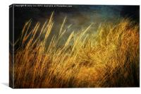 Holkham Dunes 4, Canvas Print