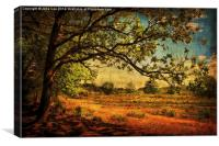 Holt Country Park 7, Canvas Print